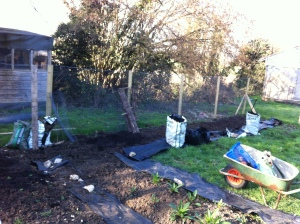 The new bed across the back of the plot for lots of sweet peas.