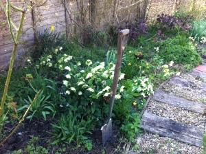 Work in progress on back garden