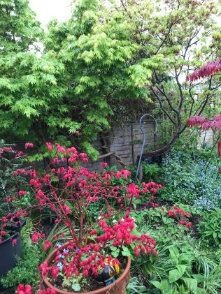 bright red acer tapestry
