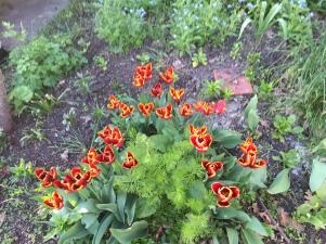 flowers 083